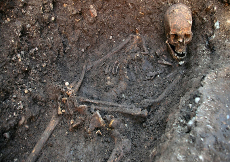 the remains of richard III